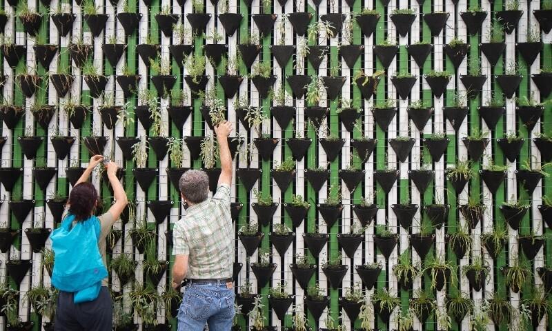 Menschen vor begrünter Wand